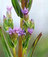fiori di bach separazione