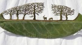Faglie e foglie
