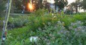 Reggio Emilia, Gabrina e un giardino in musica